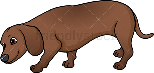 Dachshund sniffing. PNG - JPG and vector EPS (infinitely scalable).