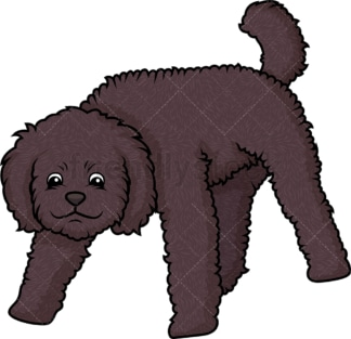 Labradoodle sniffing. PNG - JPG and vector EPS (infinitely scalable).