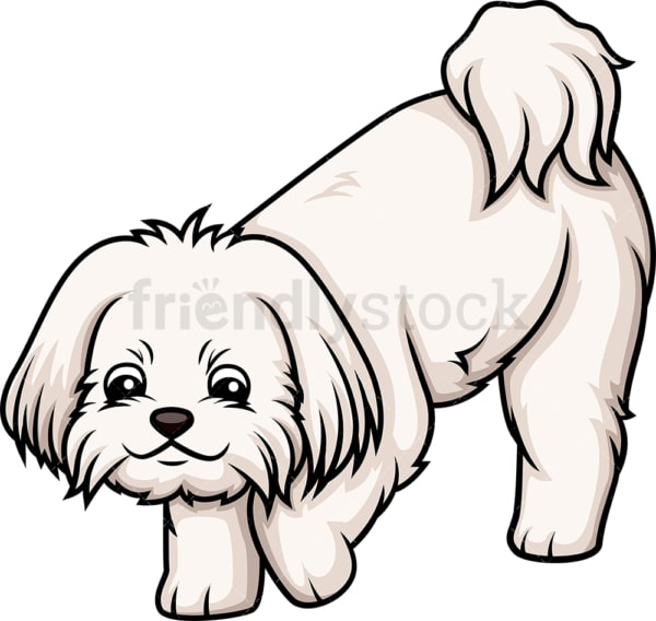 Maltese sniffing. PNG - JPG and vector EPS (infinitely scalable).