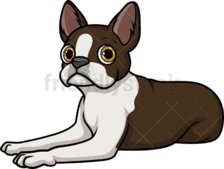Boston terrier lying down. PNG - JPG and vector EPS (infinitely scalable).