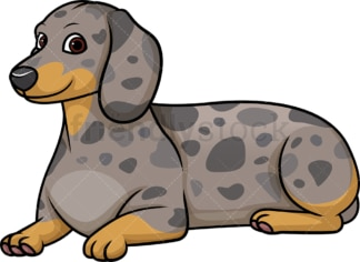 Dapple dachshund lying down. PNG - JPG and vector EPS (infinitely scalable).