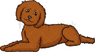 Labradoodle lying down. PNG - JPG and vector EPS (infinitely scalable).