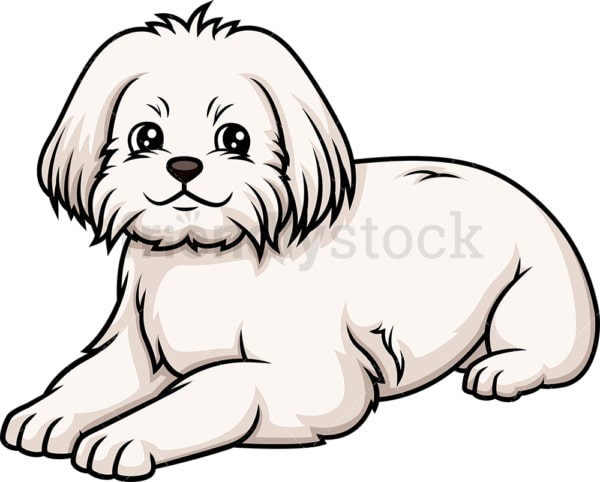 Maltese lying down. PNG - JPG and vector EPS (infinitely scalable).