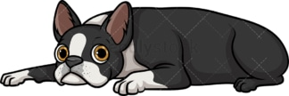 Boston terrier resting. PNG - JPG and vector EPS (infinitely scalable).