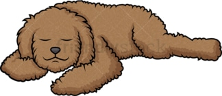 Labradoodle sleeping. PNG - JPG and vector EPS (infinitely scalable).