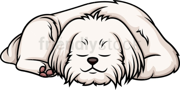 Maltese sleeping. PNG - JPG and vector EPS (infinitely scalable).