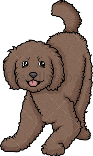 Playful labradoodle. PNG - JPG and vector EPS (infinitely scalable).
