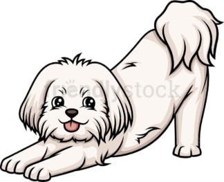 Playful maltese. PNG - JPG and vector EPS (infinitely scalable).