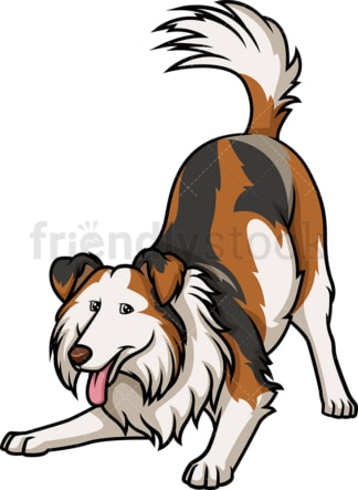 Playful tri-sable merle collie. PNG - JPG and vector EPS (infinitely scalable).