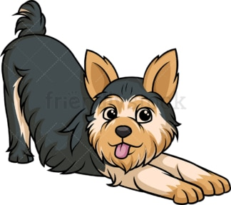 Playful yorkie. PNG - JPG and vector EPS (infinitely scalable).