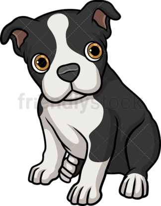 Cute boston terrier puppy. PNG - JPG and vector EPS (infinitely scalable).