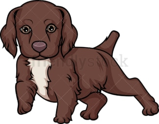 Cute english cocker spaniel puppy. PNG - JPG and vector EPS (infinitely scalable).