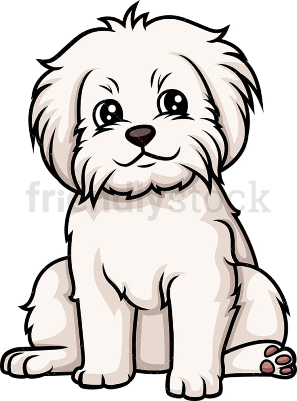 Cute maltese puppy. PNG - JPG and vector EPS (infinitely scalable).