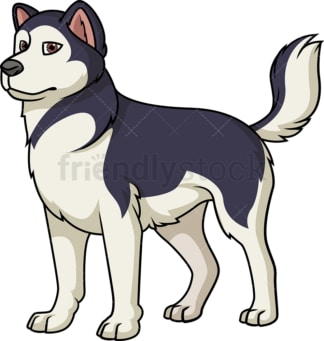 Cheerful alaskan malamute. PNG - JPG and vector EPS (infinitely scalable).