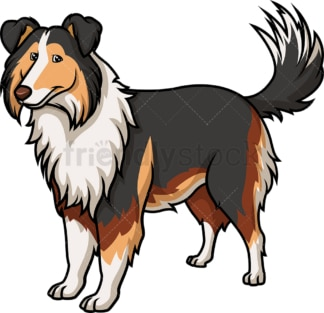 Cheerful collie. PNG - JPG and vector EPS (infinitely scalable).