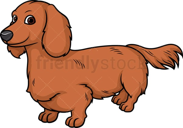 Cheerful dachshund. PNG - JPG and vector EPS (infinitely scalable).