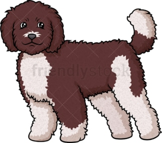 Cheerful labradoodle. PNG - JPG and vector EPS (infinitely scalable).