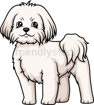 Cheerful maltese. PNG - JPG and vector EPS (infinitely scalable).