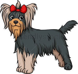 Gorgeous yorkshire terrier. PNG - JPG and vector EPS (infinitely scalable).