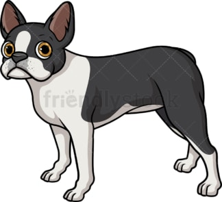Lovely boston terrier. PNG - JPG and vector EPS (infinitely scalable).