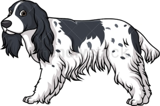 Lovely english cocker spaniel. PNG - JPG and vector EPS (infinitely scalable).