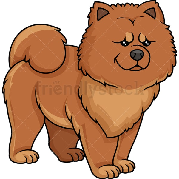 Proud chow chow. PNG - JPG and vector EPS (infinitely scalable).