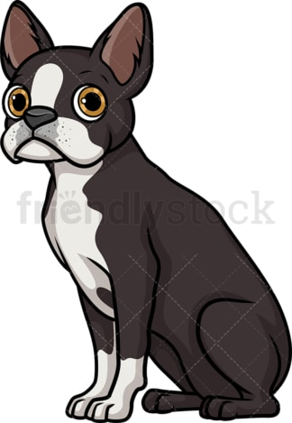 Obedient boston terrier sitting. PNG - JPG and vector EPS (infinitely scalable).