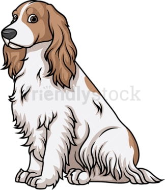Obedient english cocker spaniel sitting. PNG - JPG and vector EPS (infinitely scalable).