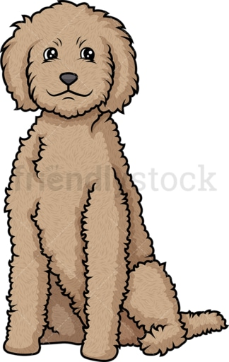 Obedient labradoodle sitting. PNG - JPG and vector EPS (infinitely scalable).