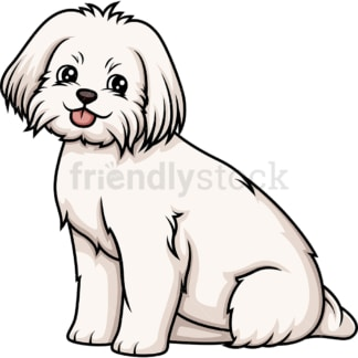 Obedient maltese sitting. PNG - JPG and vector EPS (infinitely scalable).
