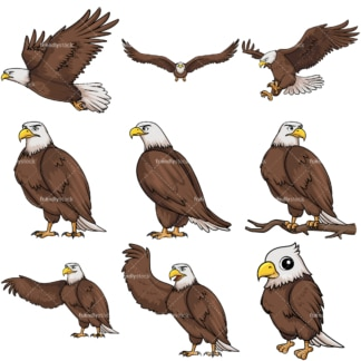 Bald eagle. PNG - JPG and vector EPS file formats (infinitely scalable).