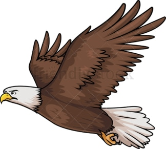 Flying bald eagle. PNG - JPG and vector EPS (infinitely scalable).