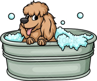 Poodle having a bath. PNG - JPG and vector EPS (infinitely scalable). Image isolated on transparent background.
