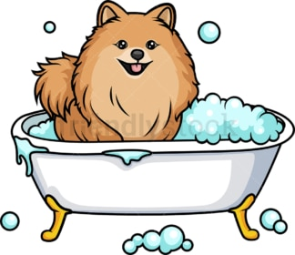 Pomeranian having a bath. PNG - JPG and vector EPS (infinitely scalable). Image isolated on transparent background.