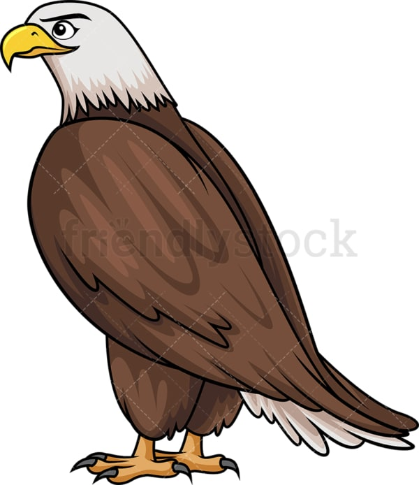 Bald eagle side view. PNG - JPG and vector EPS (infinitely scalable).
