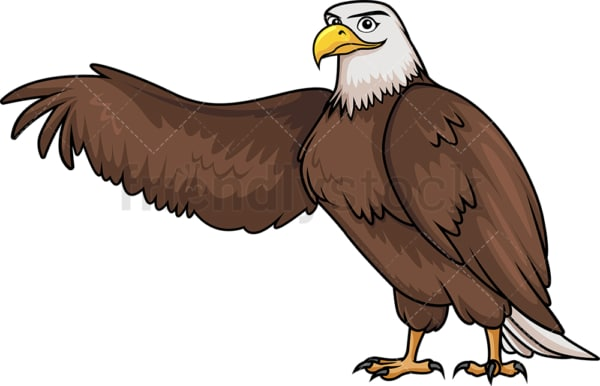 Bald eagle stretching wing. PNG - JPG and vector EPS (infinitely scalable).