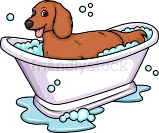 Dachshund having a bath. PNG - JPG and vector EPS (infinitely scalable). Image isolated on transparent background.
