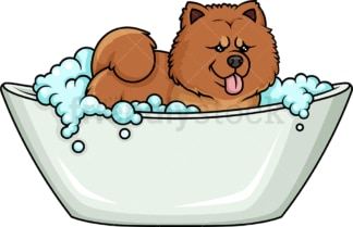 Chow Chow having a bath. PNG - JPG and vector EPS (infinitely scalable). Image isolated on transparent background.