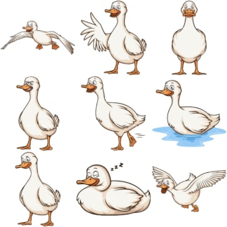 White ducks. PNG - JPG and infinitely scalable vector EPS - on white or transparent background.