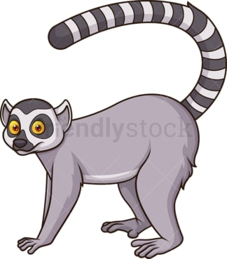 Ring tailed lemur. PNG - JPG and vector EPS (infinitely scalable).