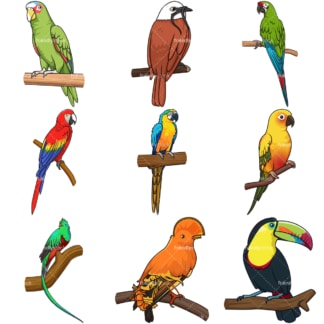 Central south america tropical birds. PNG - JPG and infinitely scalable vector EPS - on white or transparent background.