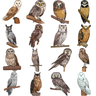 Realistic owls. PNG - JPG and vector EPS file formats (infinitely scalable). Images isolated on transparent background.