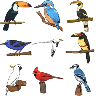 Tropical birds. PNG - JPG and infinitely scalable vector EPS - on white or transparent background.