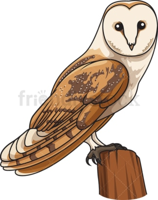 Barn owl. PNG - JPG and vector EPS file formats (infinitely scalable). Image isolated on transparent background.
