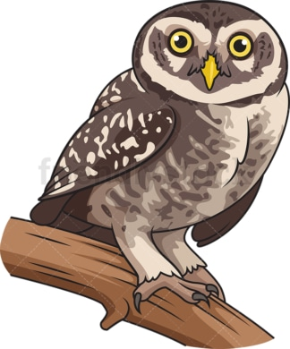 Elf owl. PNG - JPG and vector EPS file formats (infinitely scalable). Image isolated on transparent background.