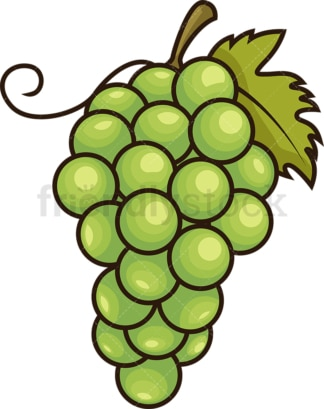 Green grapes. PNG - JPG and vector EPS file formats (infinitely scalable). Image isolated on transparent background.