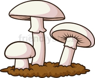 Champignon mushrooms. PNG - JPG and vector EPS file formats (infinitely scalable). Image isolated on transparent background.