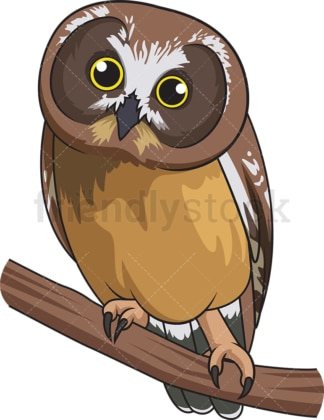 Northern saw-whet owl. PNG - JPG and vector EPS file formats (infinitely scalable). Image isolated on transparent background.
