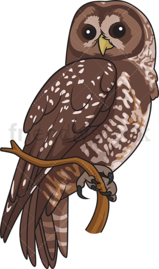 Spotted owl. PNG - JPG and vector EPS file formats (infinitely scalable). Image isolated on transparent background.