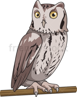 Western screech owl. PNG - JPG and vector EPS file formats (infinitely scalable). Image isolated on transparent background.